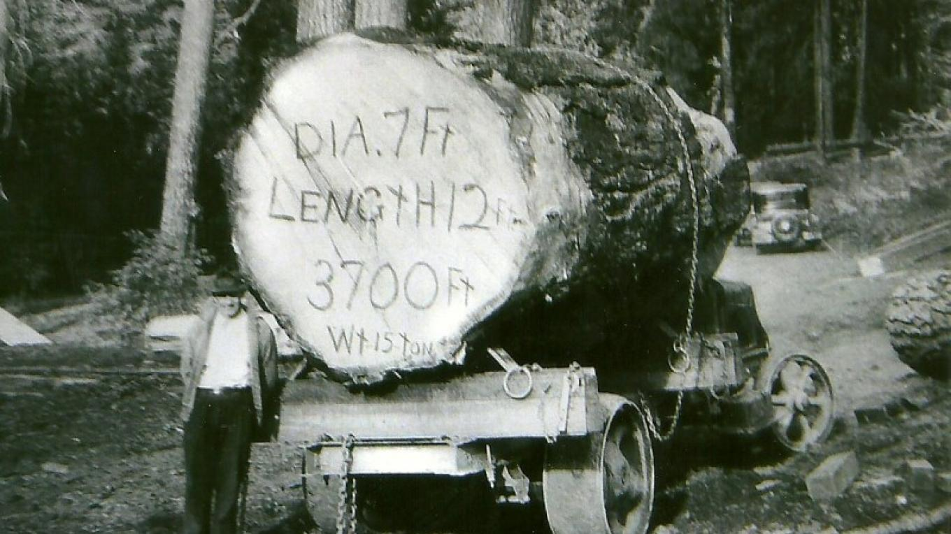 Vintage logging photo at the museum – Unknown