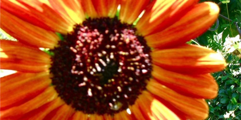 A sidewalk garden welcomes everyone into the Bellflower Garden Annex. – Karrie Lindsay