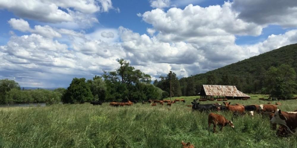 Shasta Land Trust conserves working agricultural lands. – Anne Murphy