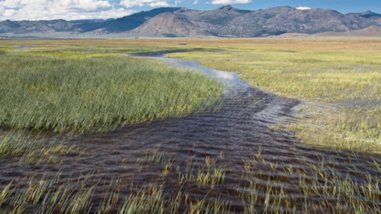 Sierra Valley Wetlands – Jim Gaither