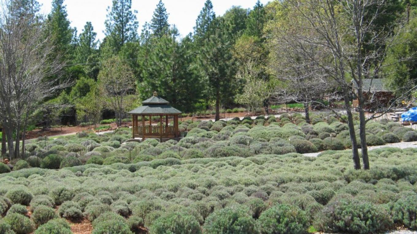 Tuscan Heights Lavendar Farm – Tuscan Heights Lavendar Farm