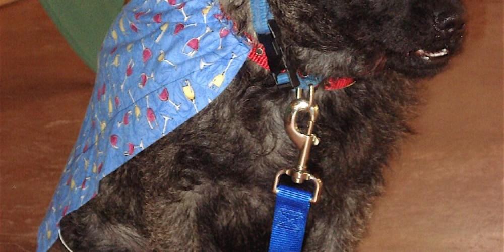 Groveland\'s Honorary Mayor, 2009-2010, a dog named Goose! – Lynn Upthagrove