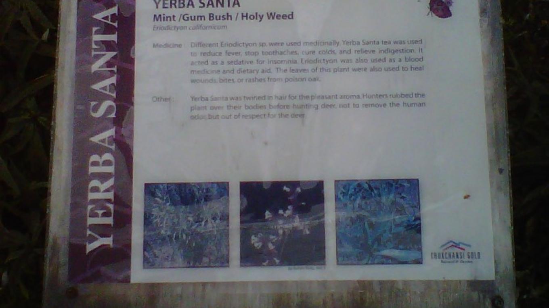 Yerba Santa Sign – Chukchansi