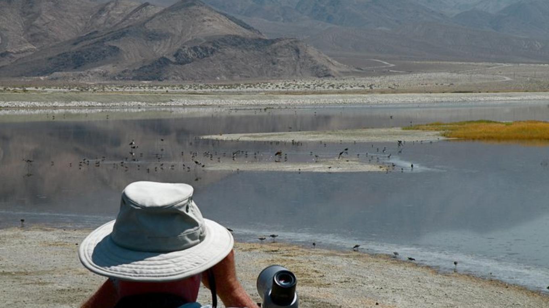 Owens Lake birding – http://esaudubon.org