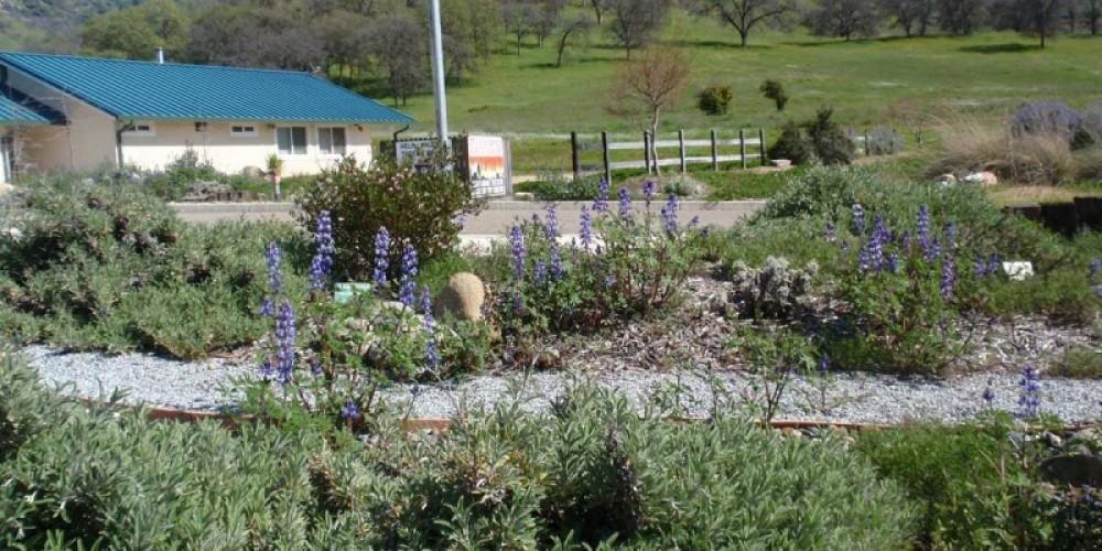 CAL Fire Native Plant Garden – Redbud Garden Club