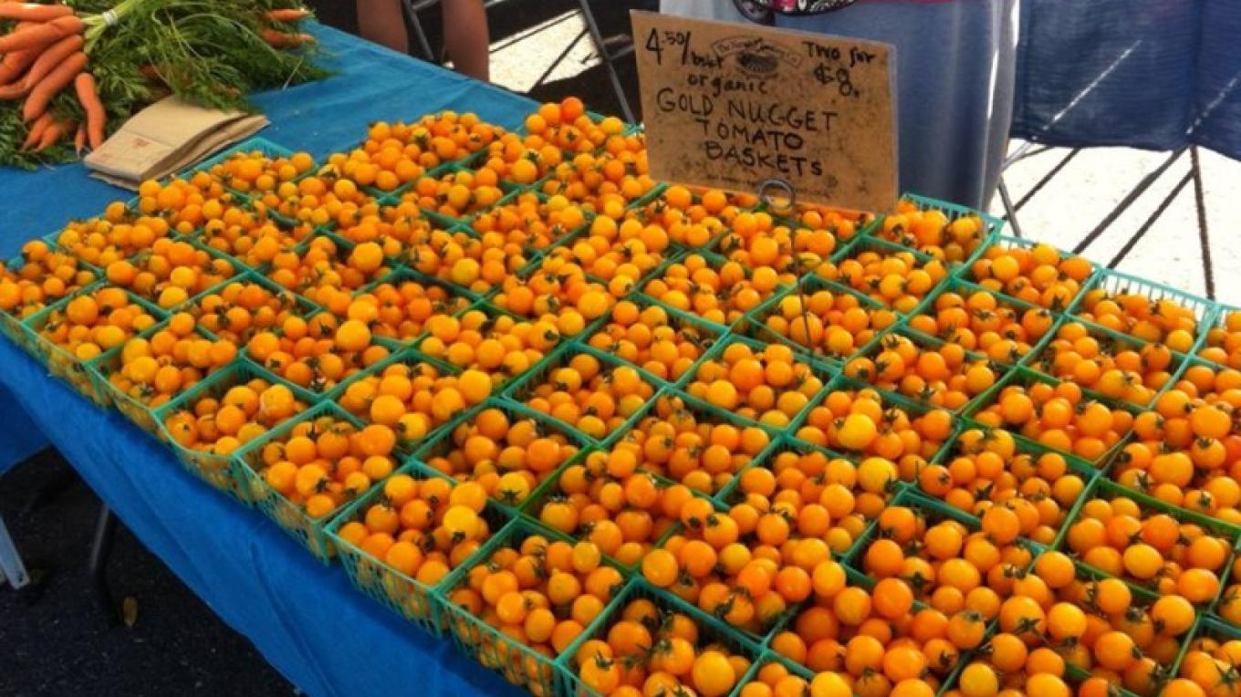 Golden nugget tomatoes at the Auburn Old Town Farmers' Market. – Foothill Farmers Market