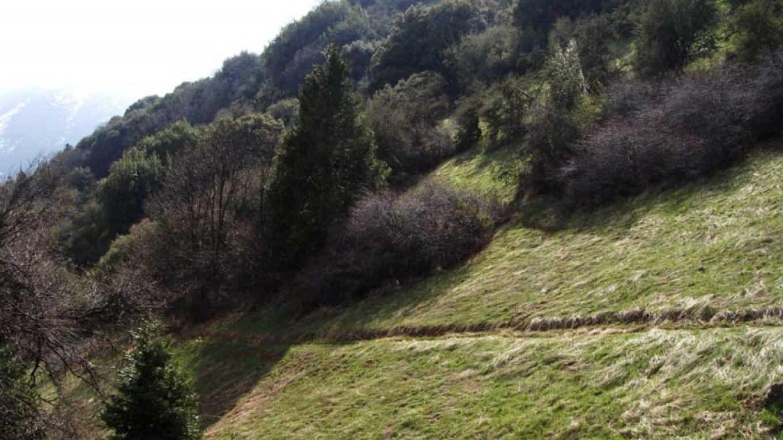 Open hillside view from Ladybug Trail – NPS