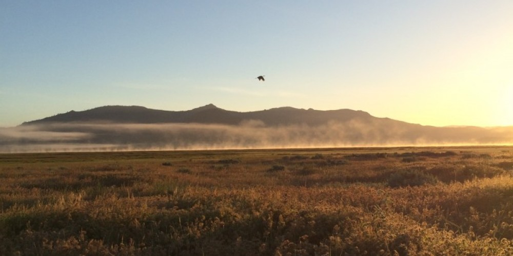 """Sierra Valley, the largest wetland in the Sierra Nevada, is designated an """"Important Bird Area"""" by Audubon for its diversity and abundance of breeding, migratory, and wintering birds. – - photo by Kristi Jamason"""