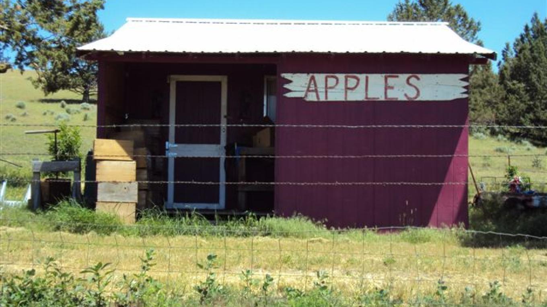 The Apple Shack – Betsy Ingraham