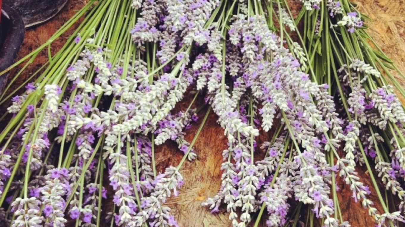 The Pine Grove Farmers Market has fresh lavendar and much more! – Amador County Farmers Market Association