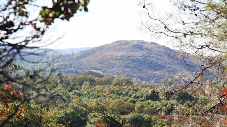 Pine Hill Preserve – Pine Hill Preserve