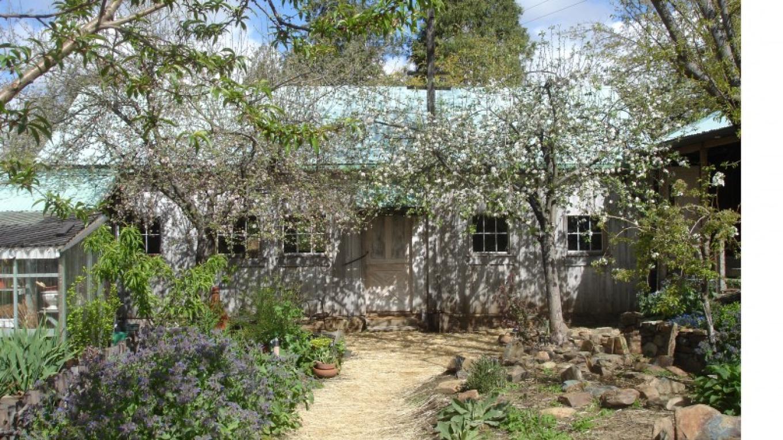 apple blossoms at the barn – Lindsay Way