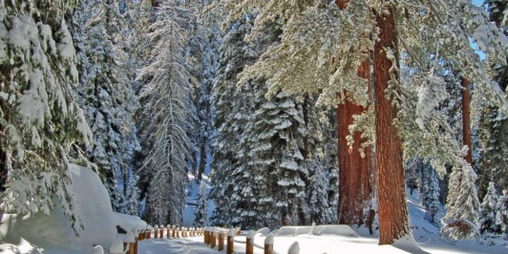 The trail to the General Sherman Tree, Sequoia National Park – Tom Marshall