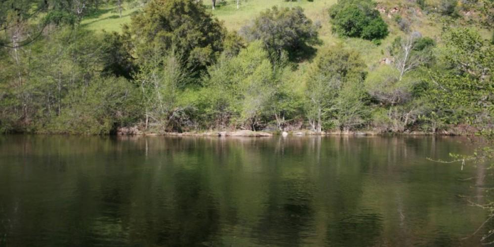 Adjacent to the Kaweah River – pam lockhart