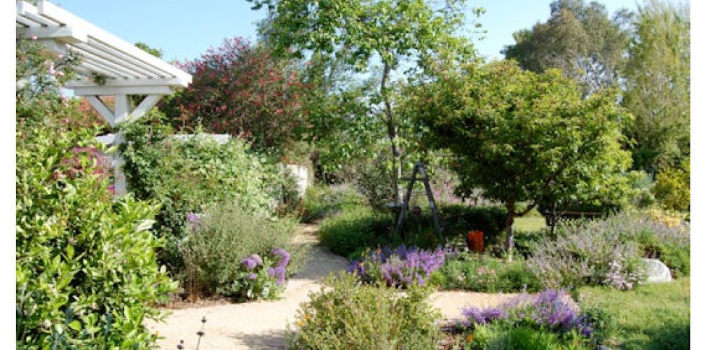 A beautiful California native plant garden, featured on the CNPS Grow Natives Blog – Laure Camp