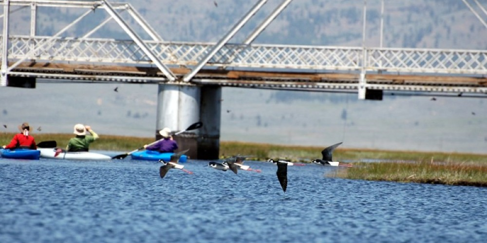 Kayakers by the Steel Bridge – Mary Davey
