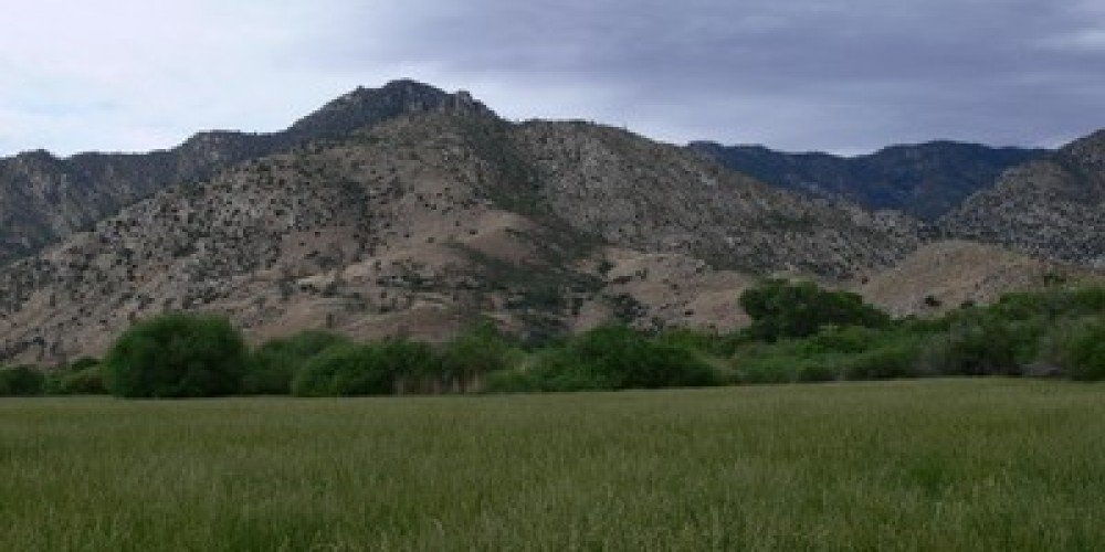 Canebrake in spring can be one of the greenest places in the Kern River Valley. – Alison Sheehey