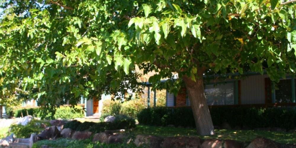 "Lush shade tree in front of ""Hawks"" cottage #1 – Jon-Paul Fortunati"