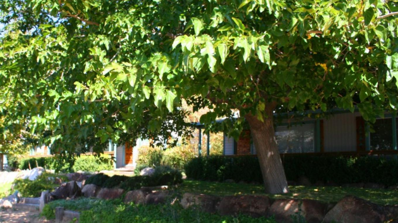 "Lush shade tree in front of ""Hawks"" cottage #1 – Jon-Paul Fortunati"
