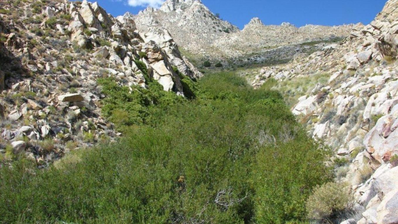 Riparian habitat in Short Canyon – Shelley Ellis