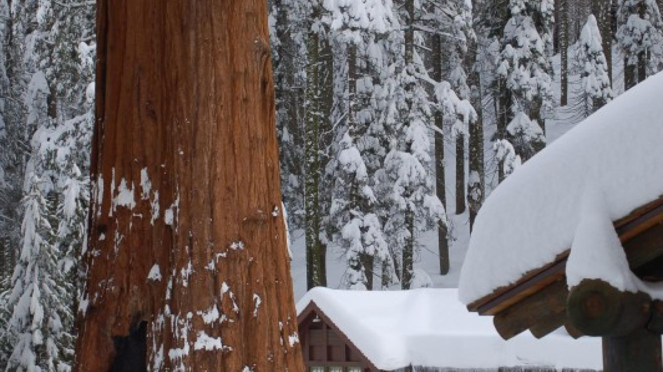 Giant Forest Museum, Sequoia National Park – Tom Marshall