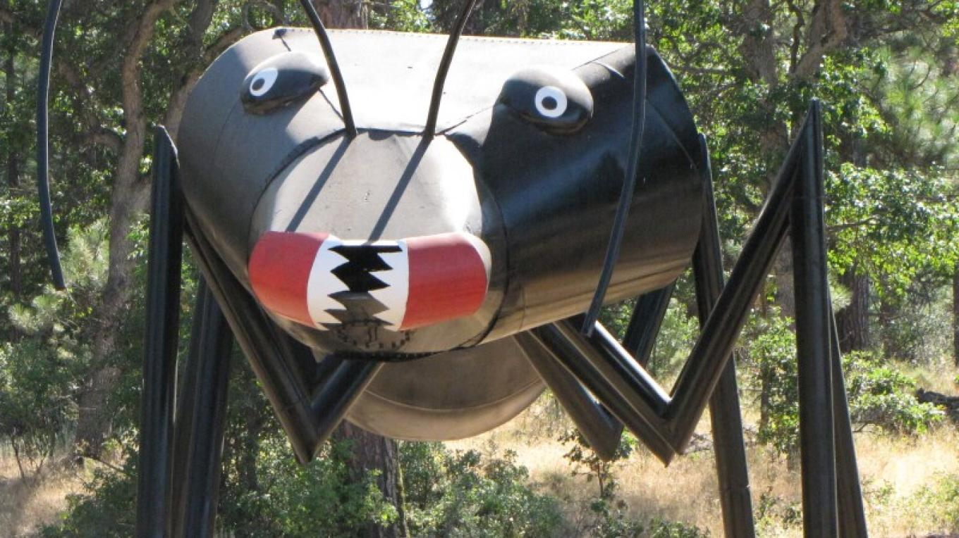 The giant ant at Packway seems strangely at home in the forests around Hat Creek. – Ben Miles