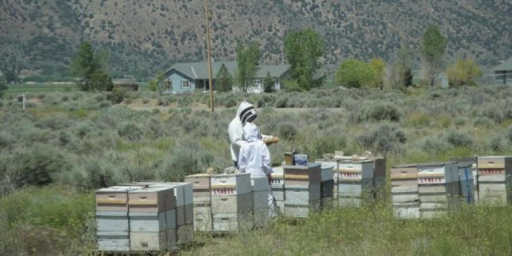 Southern Bee Yard – Carri Ellis