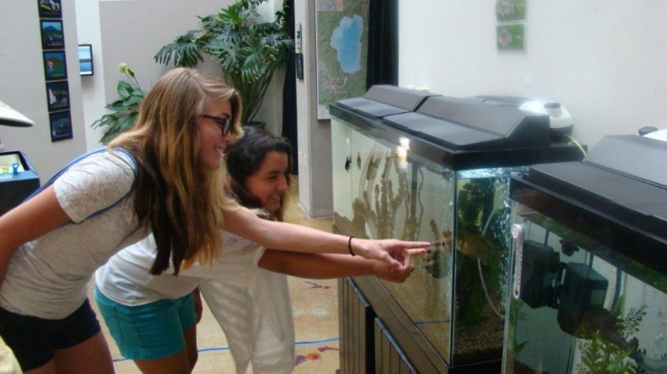 Native and non-native fish in aquariums – Hannah Leigh