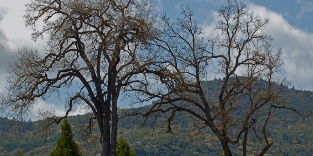 View From Oakhurst – Don Grove