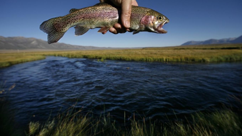 Eastern Sierra Owens River & Rainbow Trout – Rick E. Martin