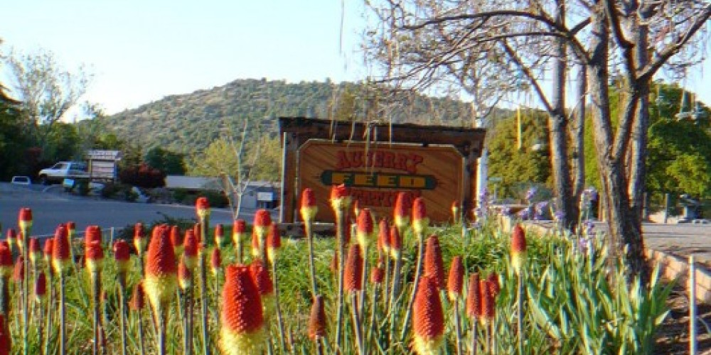 Auberry Feed Station with Rancheria Mountain – Susan Leeper