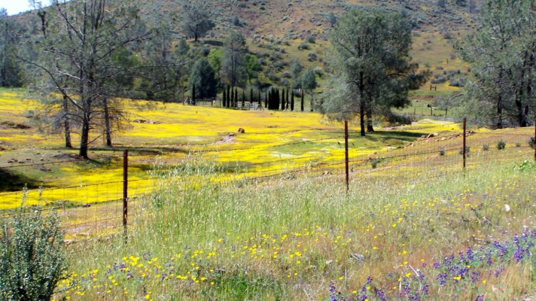 Red Hills Wildflowers in Spring – Sandy Gordon