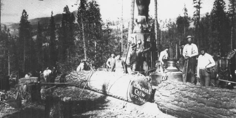 Logging operation near Loyalton 1906 – unknown