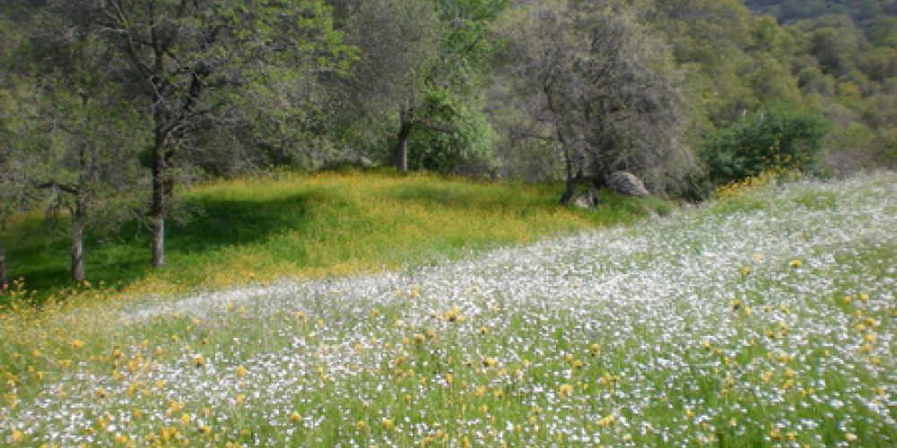 Cort Cottage Bed and Breakfast, wildflower meadow on Case Mountain trail near cottage – Elsah Cort