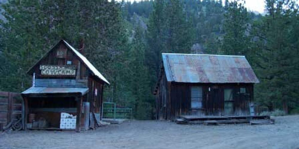 Scossa Cow Camp