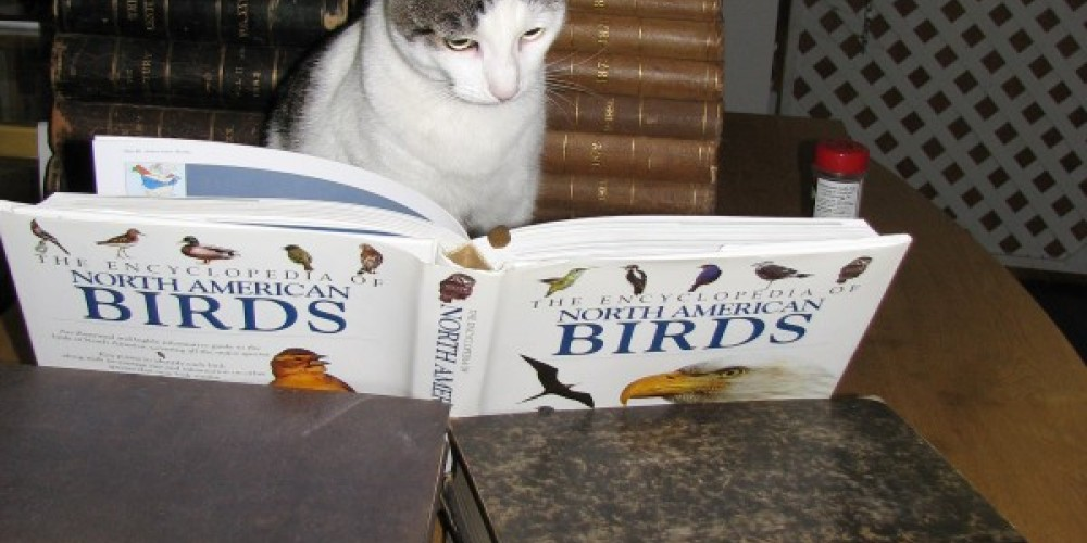MEET EMILY DICKINSON.  SHE'S VERY INTERESTED IN BIRDS. – LINDA HEIN