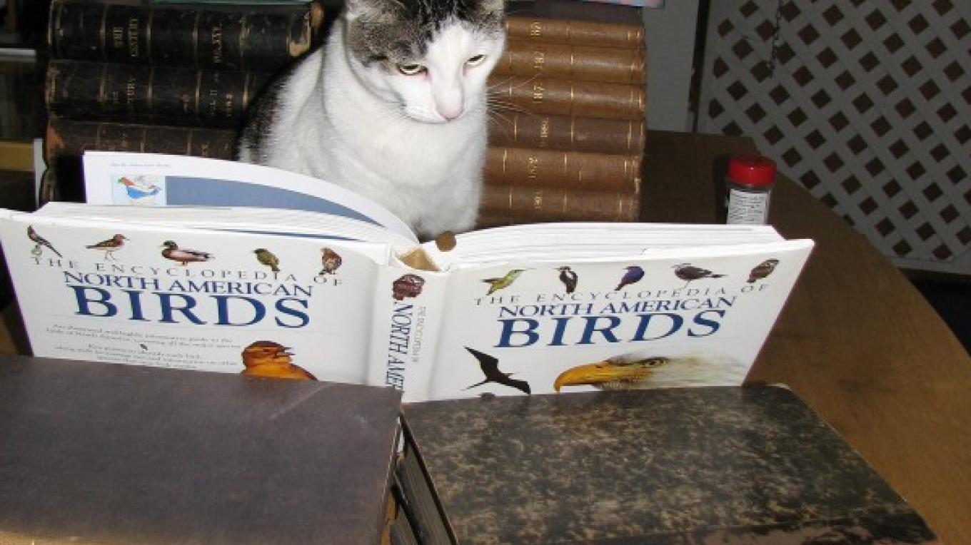 MEET EMILY DICKINSON.  SHE'S VERY INTERESTED IN BIRDS. – LINDA HEIN