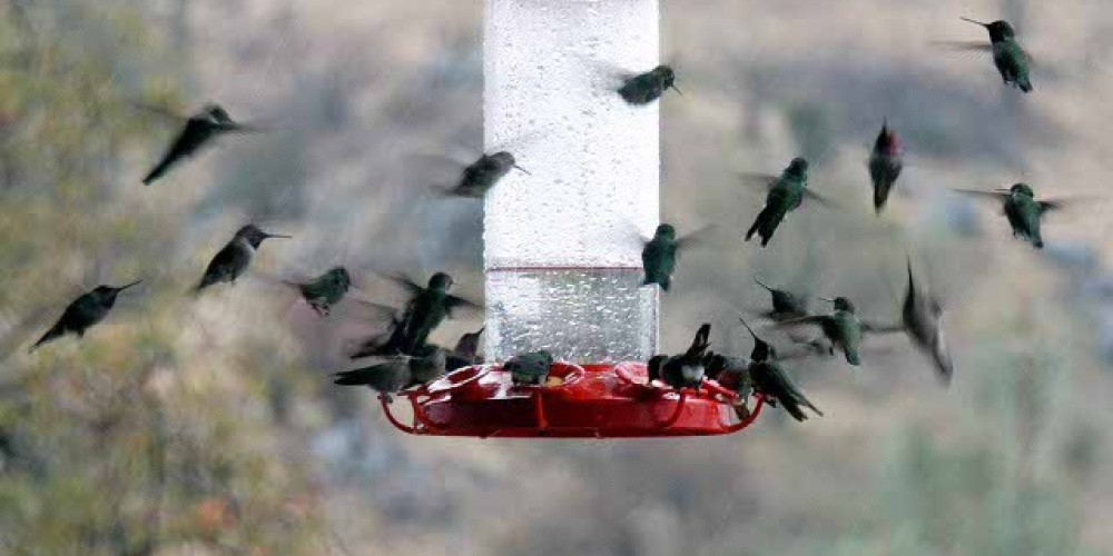 Just one of the many feeders at this site. – BArbara Robinson