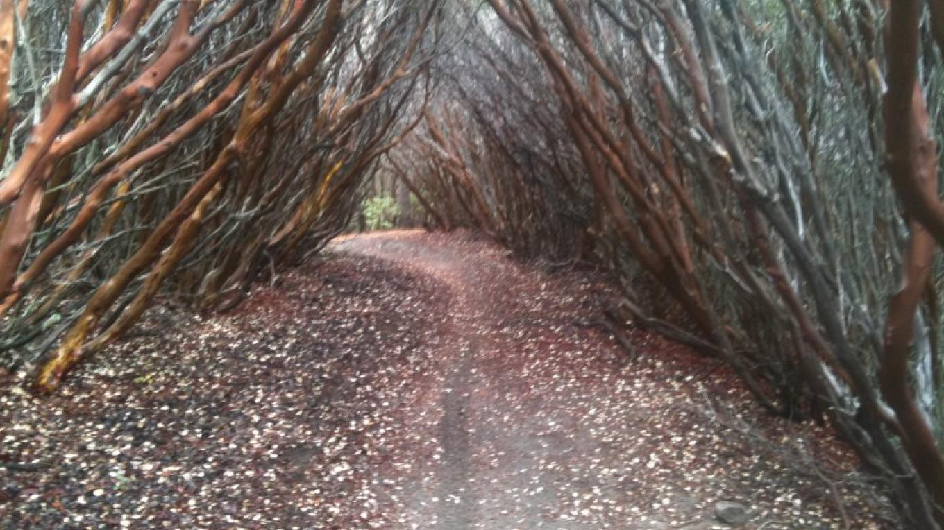 Manzanita tunnell on Just Outstanding. – Mountain & River Adventures