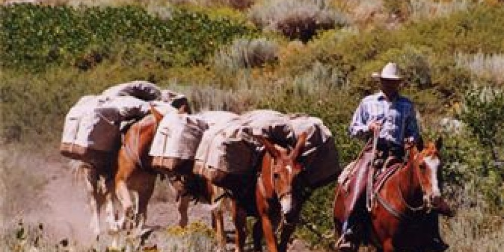 McGee Canyon Pack String