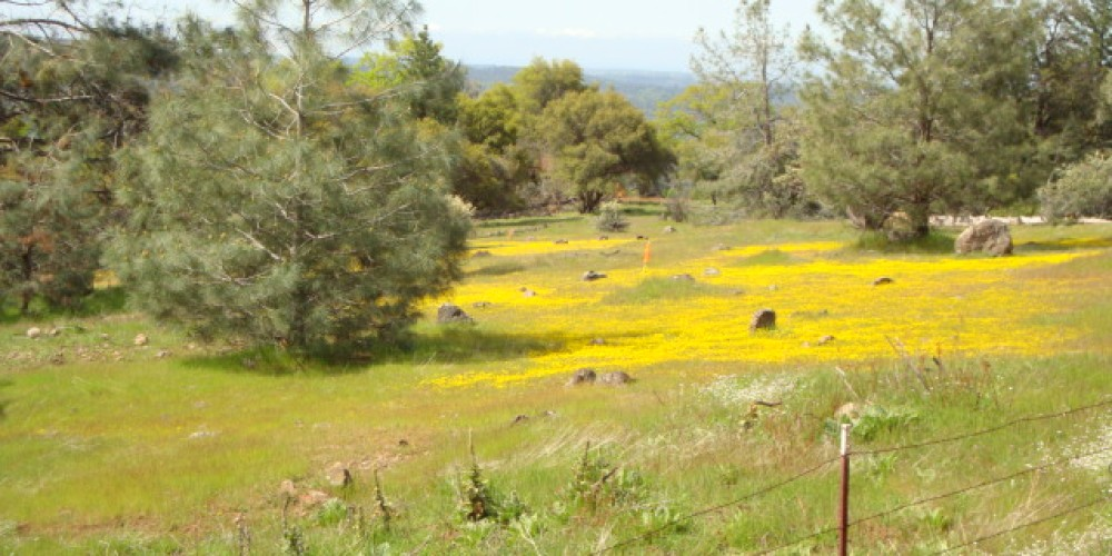 Spring flowers off the trails – CK Martin