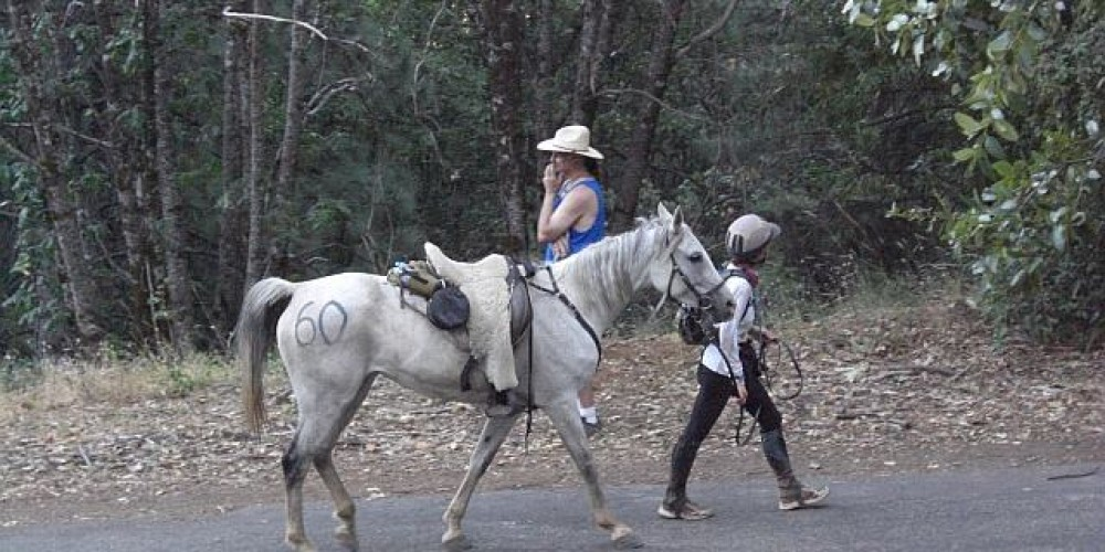 Tevis Rider coming into Foresthill – Debbie Griffin