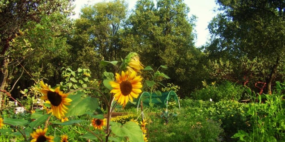 Manzanita Ridge - participating farm, Jackson, CA – Sean Kriletich