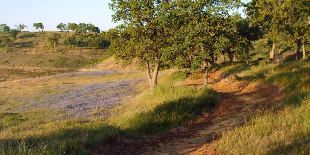 Shoreline trail 6 – Dave Jigour