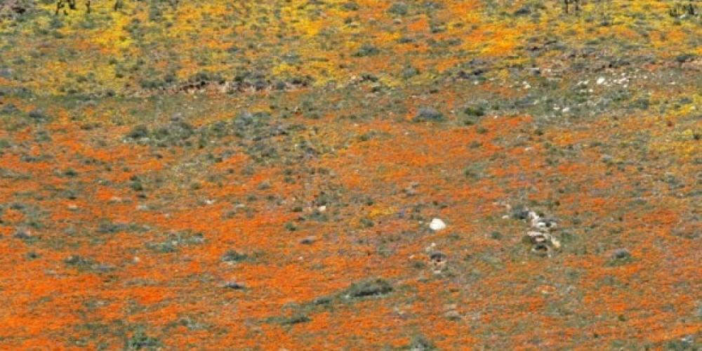 poppy slope – shelley ellis