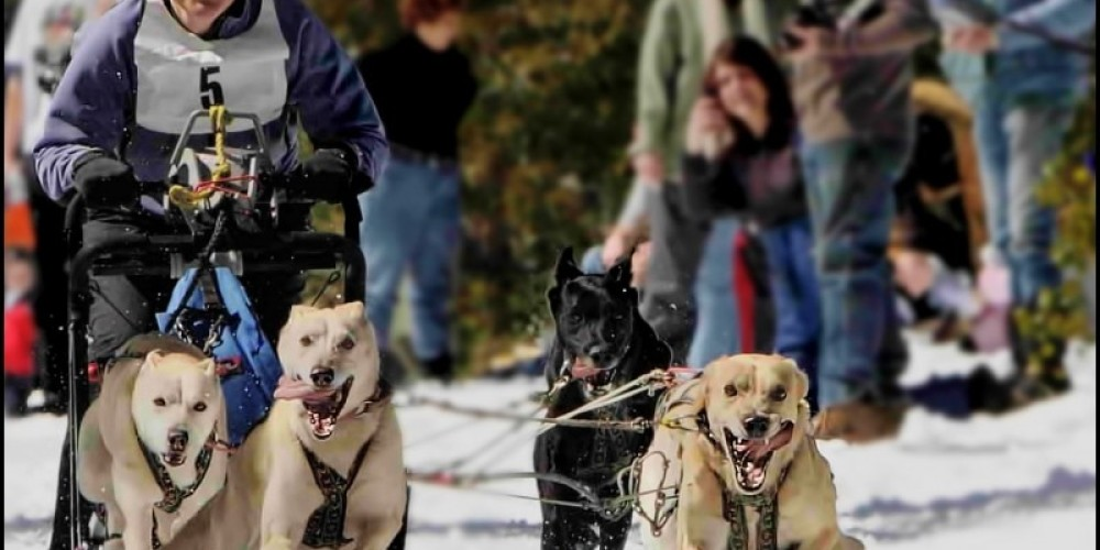 Sled Dog Races at China Wall OHV Staging Area – Darin Pointer - www.ffgphotos.com