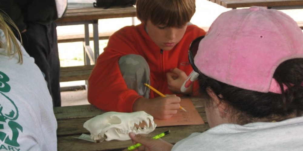 Environmental Workshops – Dawn Armstrong