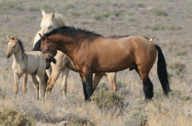 Carter Reservoir Wild Horse Herd Sierra Nevada Geotourism