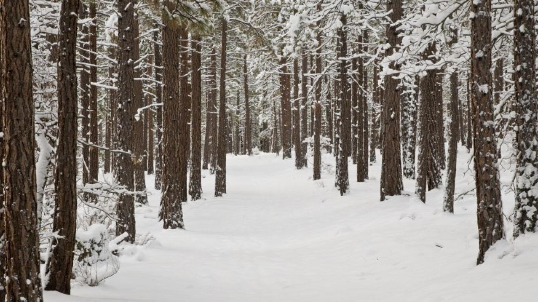 Quiet Pines – Joel Rathje