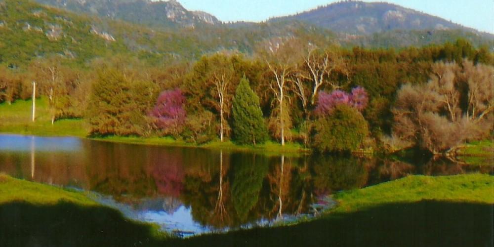 Sierra High School pond with Red Bud. Tollhouse Rock in background – Susan Leeper